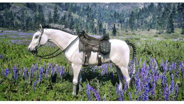 اهمیت نگهداری از اسب در بازی Red Dead Redemption 2
